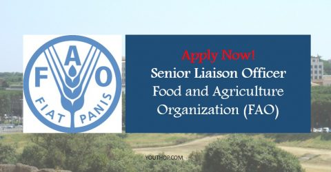 Senior Liaison Officer at Food and Agriculture Organization of the United Nations