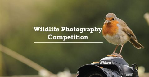 Wildlife Photography Competition 2018
