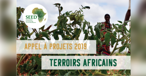 The SEED Foundation Call For Proposal 2019