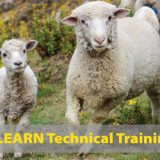 LEARN Technical Training Award