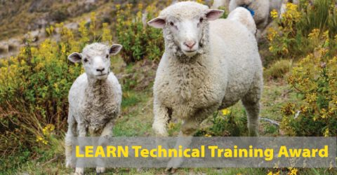 Technical Training Award in New Zealand by LEARN (Up to NZD$22,000)