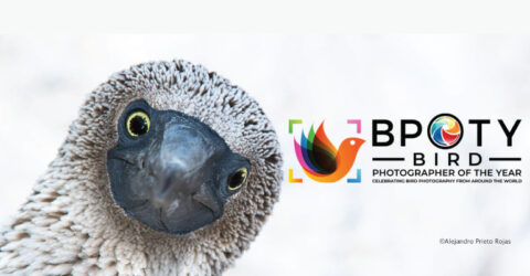 Call for Photographers: Bird Photographer of the Year- International Wildlife Photography Competition 2021