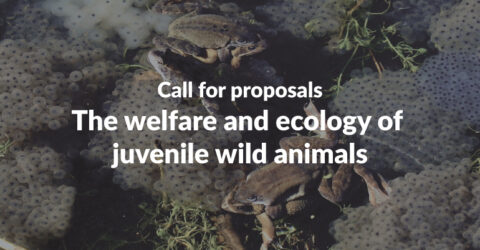 Call for Proposals: The Welfare and Ecology of Juvenile Wild Animals