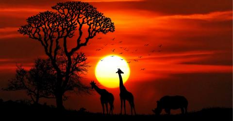 صندوق محمد بن زايد لحفظ الأنواع المهددة بالانقراض 2019